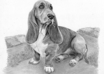 Basset graphite sketch Kathrin Guenther web file