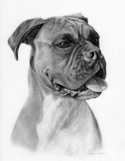boxer dog drawing by Kathrin Guenther, graphite art, pet art