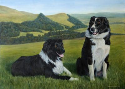 Sheepdogs from Scotland, painting by Kathrin Guenther