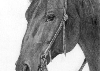 western horse graphite drawing Kathrin Guenther web file