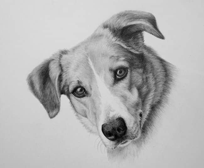 Is there a perfect pose for a pet portrait?